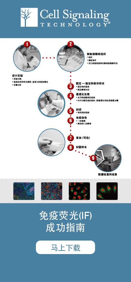 2017 IF白皮书 实验成功指南